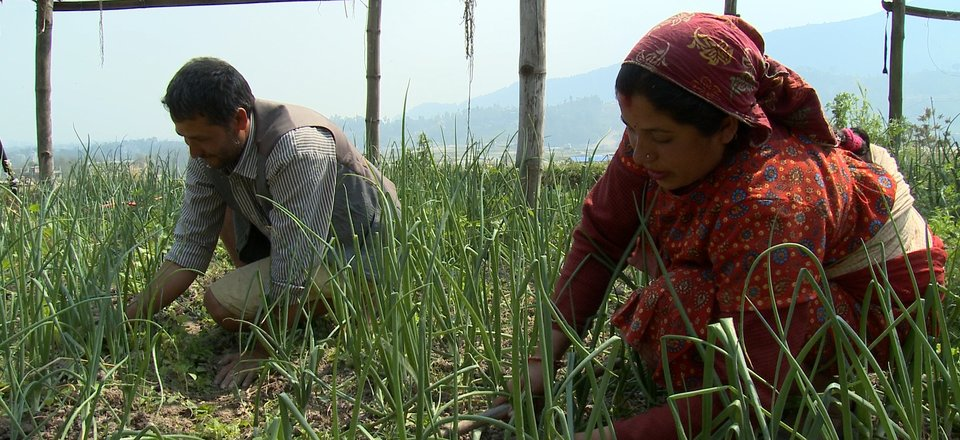 Roshani Ghimere, right, and her husband Rishiram Ghimere work on their farm in Nepal